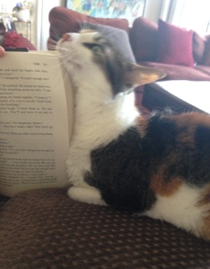 Obligatory writing cat interrupting the reading.
